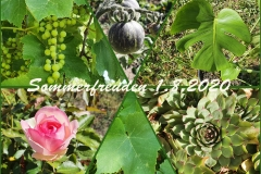 PicCollageMaker_202081174238843